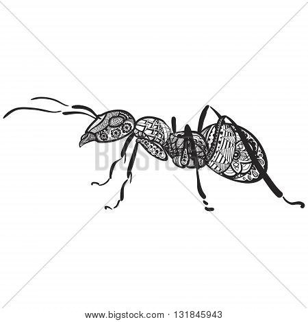 zentagle hand drawn ant black and white