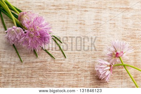 Pretty pink blossom with the chive herb on light wooden background. Top view with copy space shot for message board