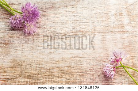 Pretty pink flowers of the chive herb on light wooden background. Top view with copy space shot for message board