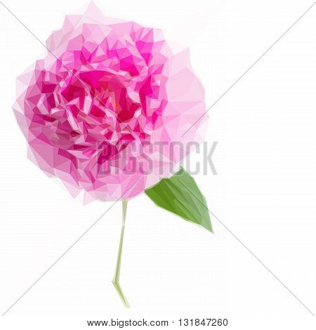 Low poly illustration one pink peony flower