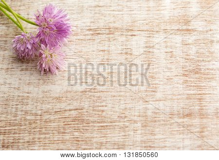 Pretty pink bunch of flowers from the chive herb on light wooden background. Top view with copy space shot for message board