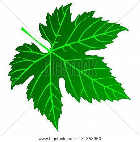 green fig leaf , illustration , garden