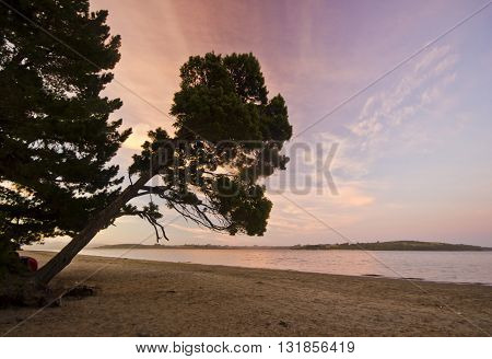 purple sunset on ocean beach with slanted tree