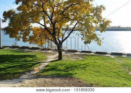 Lonely tree on the riverbank. Golden autumn. Beautiful landscape.