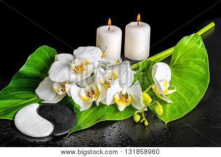 Spa Concept Of Orchid Flower, Phalaenopsis, Leaf With Dew, Candles And Yin-yang Stone Texture Is Iso