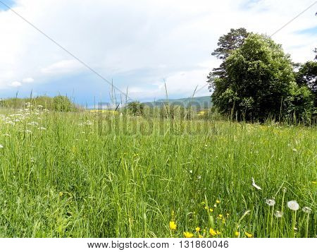 Meadow in spring and deciduous forest in background