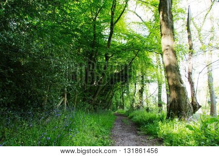Beautiful English Woodland On A Spring Morning