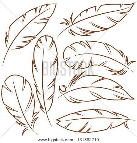 Vector outline set with decorative bird feathers