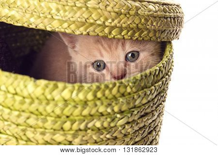 Small cute kitten in wicker basket, isolated on white