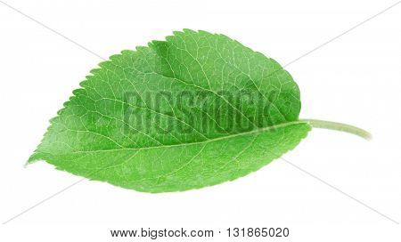 Green leaf, isolated on white