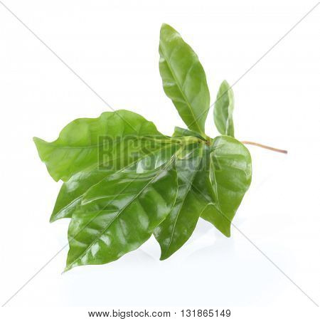Green leaves, isolated on white