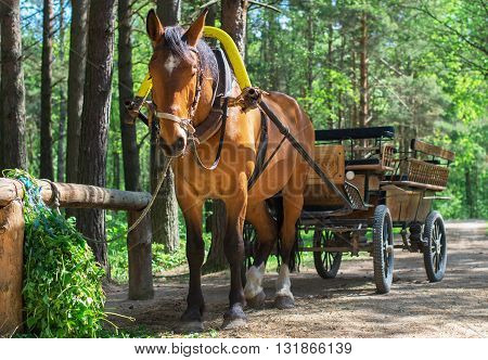 Brown horse with cart in the forest.