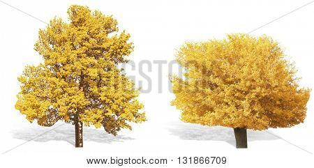Autumnal trees, isolated on white