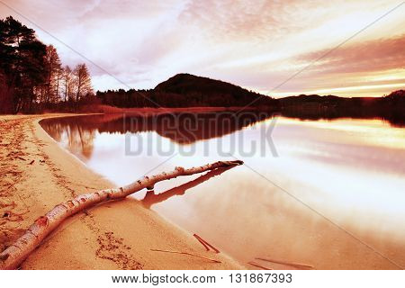 Autumn Evening At Lake After Sunset. Wet Sand Beach With Dry Tree  Fallen Into Water. Colorful Sky.