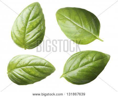Set of fresh basil leaves isolated on white