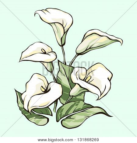 Bouquet of white callas on a blue background