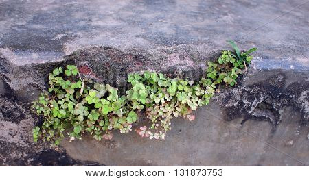 plant growing from a cement block wall