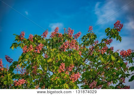 blossom background with lovely pink color in Germany