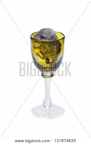 Cute baby chinchilla sitting in green wine glass isolated over white background. Copy space.
