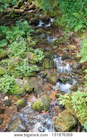 Mountain river flowing through the green forest. Stream in the forest