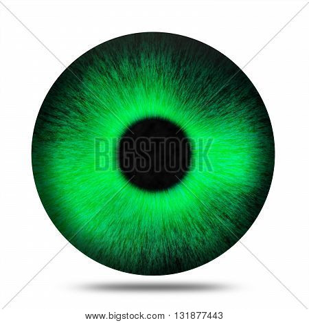 Isolated realistic green eye pupil against white background