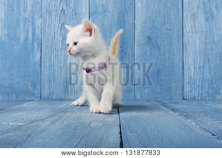 White kitten with white chest. White cute kitten. Sweet adorable kitten on a serenity blue wood background. Small cat. Funny kitten with copyspace