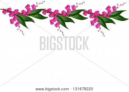 Orchid flower isolated on white background. Delicate flower