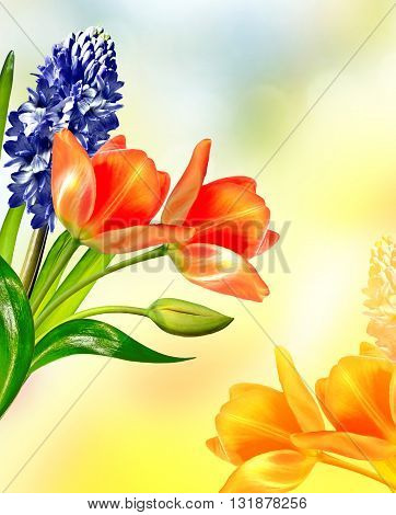 Spring landscape. beautiful spring flowers tulip. blue hyacinth