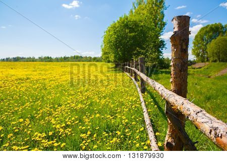 Corral for farm ruminant livestock. Rural view flower meadow and fenced place for walking cows. Pastoral panorama of nature summer. Beautiful landscape of a Sunny day. Field with yellow dandelions.