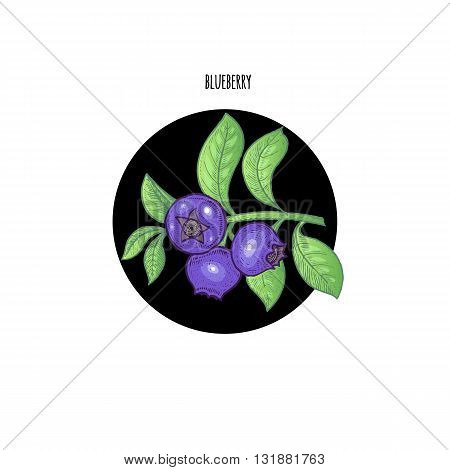 Vector illustration of blueberry berries in a black circle on a white background. Design of packaging food products cosmetics shampoos health supplements.