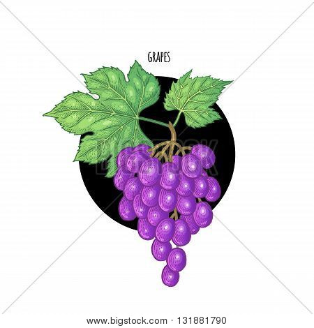 Vector illustration of grape berries in a black circle on a white background. Design of packaging food products cosmetics shampoos health supplements.