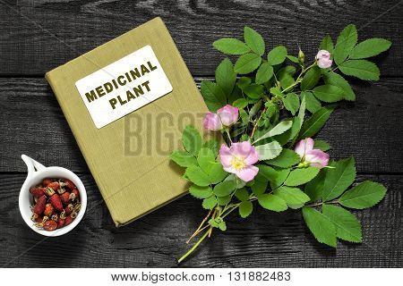 Branch of blossoming rose hips dried briar and herbalist handbook. Used in herbal medicine nutrition horticulture
