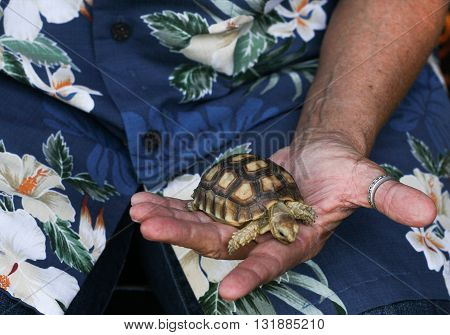 A small turtle being held in the hand.