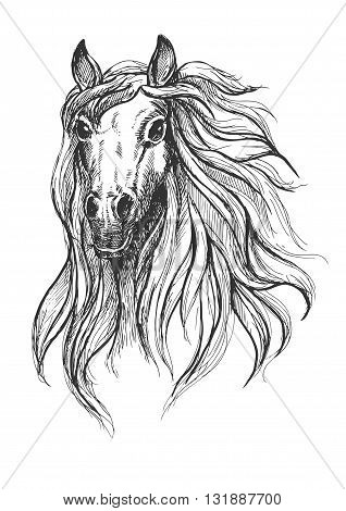 Spooky horse sketch drawing of wild young mare with big scared eyes.