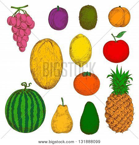 Sunny yellow canary melon and pineapple, pear and lemon, juicy orange, peach and grapes, apple and plum, green kiwi, avocado and watermelon fruits sketch symbols.