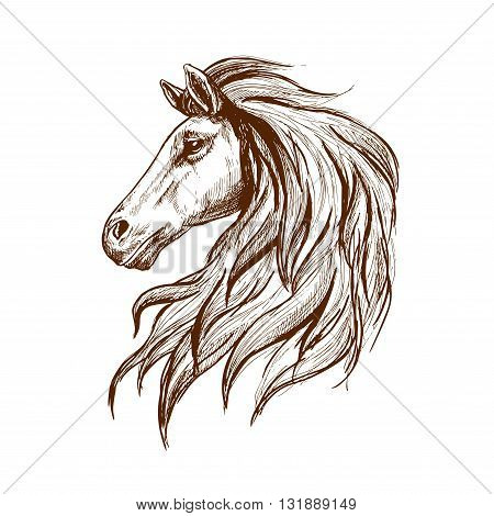 Gorgeous arabian racehorse vintage engraving sketch with profile of young stallion head with long mane.