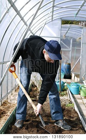 Man in greenhouse digging the soil a shovel on the gardenbed in early spring