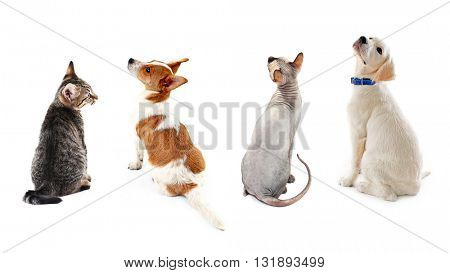 Cats and dogs together, view from the back, isolated on white