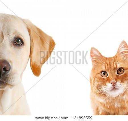 Cat and dog portraits, isolated on white