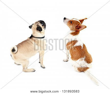 Two  dogs together, view from the back, isolated on white