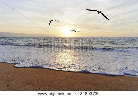 Birds ocean flying is three birds flying toward the bright peaceful sun ocean horizon.