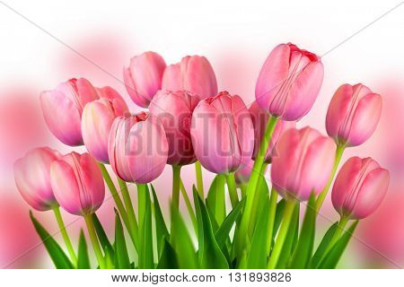 Background of  Pink Tulips,  spring flowers bouquet