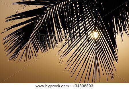silhouette of palm tree leaves at sunrise