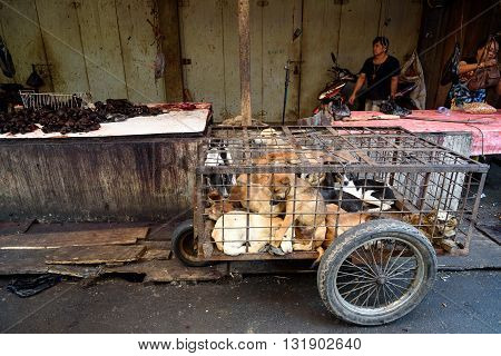 Tomohon Indonesia - Dec 23 2015: Dogs in cage awaiting slaughter on Tomohon Traditional Market. North Sulawesi