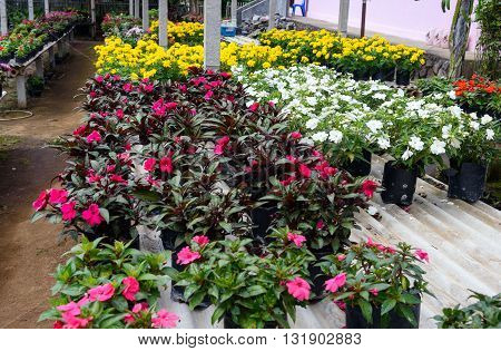 Different Flower Plant In Greenhouse