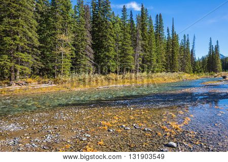 Pine forest in  Rocky Mountains. Beneaped creek autumn in Banff National Park. Canada