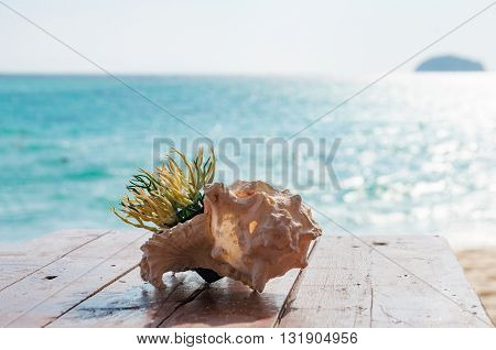 Artificial green grass in a pot inside sea shell on a wooden table in front of the beach