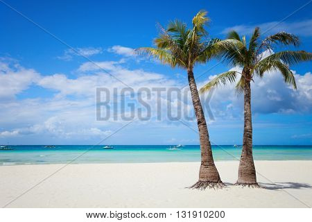 Perfect tropical white sand beach with palm trees