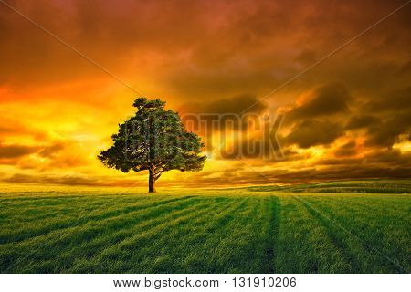 tree in field and orange sky with clouds