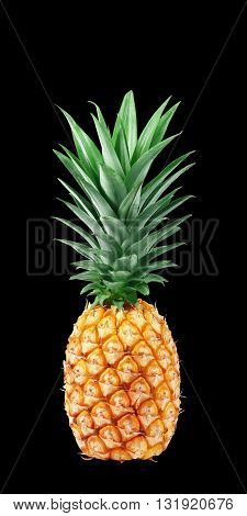 The Pineapple isolated on black background. Fresh pineapple